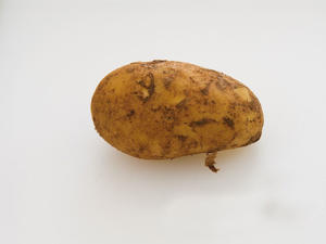Photo: Jersey Royal - A new potato, with a short season from April to June, this is especially valued for its flavor. Good for boiling and serving in salads.