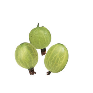 Photo: Gooseberries - Choose gooseberries that are large with a slight tawny blush.