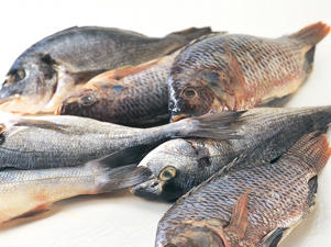 Photo: Mackerel - A good source of vitamin D, this fish also contains vitamins niacin (B3), B6, and B12, phosphorus, iodine, selenium, potassium, and heart-protecting omega-3 fatty acids.