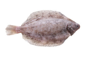 Photo: Lemon Sole - A delicate flat fish that requires quick, gentle cooking to avoid over-cooking.