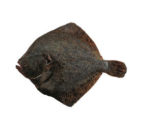 Photo: Turbot - The most expensive flat fish, this has delicate flesh that is excellent pan-fried.