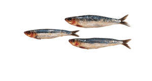 Photo: Sardine - An oily fish that is cooked whole or in fillets. It is especially good barbecued.