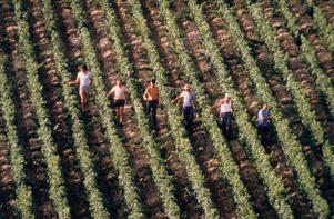 Photo: Workers at Château Lafite-Rothschild, Pauillac