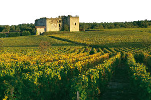 Photo: Vineyards and ruined château in Sauternes