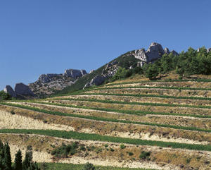 Photo: Terraced vineyards in Gigondas