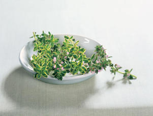 Photo: The refrigerator is the best place to store freshly cut herbs, either with their stems in water or on a damp paper towel.