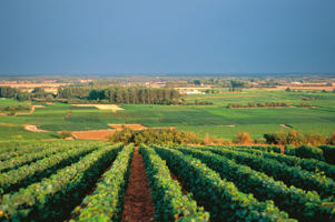 Photo: Vineyards in the Côte de Beaune