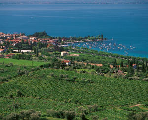 Photo: Vineyards around Bardolino on Lago di Garda (Lake Garda)