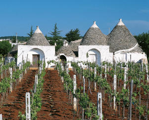 Photo: Vineyard in Martina Franca, southern Puglia