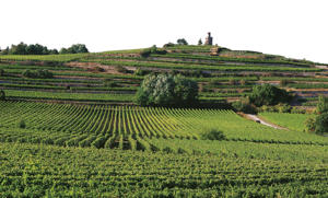 Photo: Vineyards around the village of Wachenheim in the Pfalz region