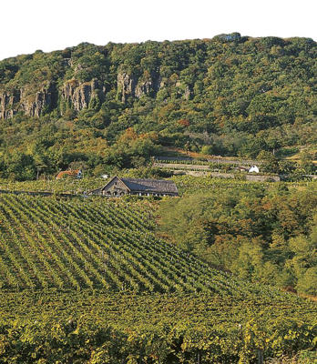 Photo: Vineyards on the slopes of Mount Badacsony