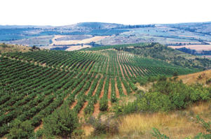 Photo: View of vineyards near Melnik, Southwestern Region