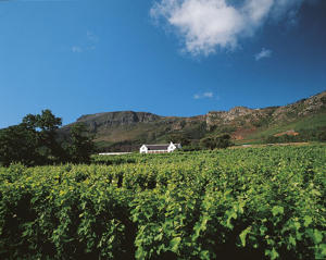 Photo: Cape Point Vineyards, Cape Point District