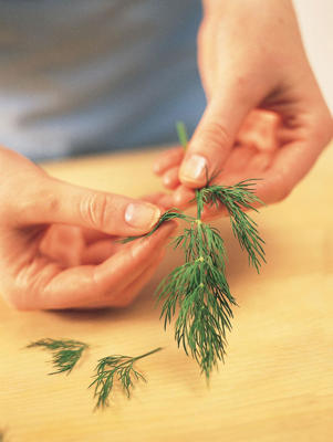 Photo: Pluck fennel leaves from the stalk, pulling the leaf sprays upward with one hand. Remove any thick stalks that remain.