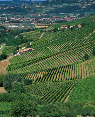 Photo: Barbaresco vineyards above the Tanaro Valley
