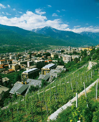 Photo: Hillside vineyards in Valtellina, Lombardia