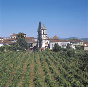 Photo: Village of Sabrosa set among vineyards of the Douro Valley