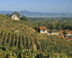 Photo: Vineyards on the hill behind the town of Tokaj