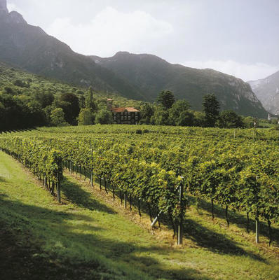Photo: Tenuta San Leonardo vineyards, Trentino