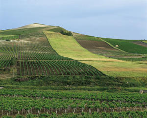 Photo: Vineyards in Marsala, Sicilia