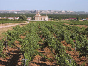 Photo: Tempranillo vineyard, Emilio Moro