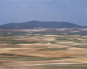 Photo: Vineyards on La Mancha plain, Castilla-La Mancha