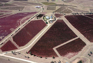 Photo: Aerial view of vineyards, Lower Hunter Valley