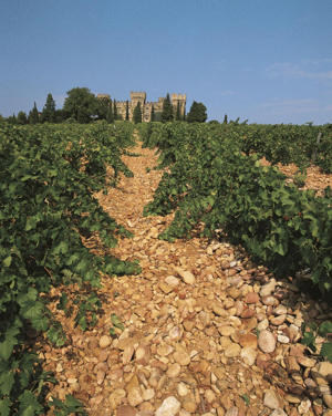 Photo: Galets roulés (large stones) in a Châteauneuf-du-Pape vineyard