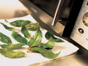 Photo: Herbs can also be quickly and easily dried in the microwave. Scatter cleaned leaves and sprigs evenly on a double layer of paper towels and microwave at 100 percent for 21/2 minutes. Store in an airtight container.