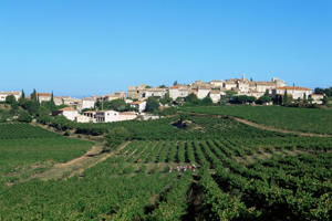 Photo: Vineyards in the AOC Côtes du Rhône