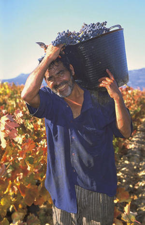 Photo: Picker at Marqués de Riscal