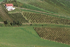 Photo: Farmhouse overlooking sloping vineyards near Graz, Steiermark
