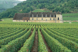 Photo: Clos de Vougeot's grand cru vineyard and château, Vougeot