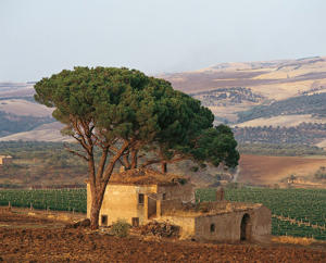 Photo: Farmhouse and vineyard in Aglianico del Vulture, Basilicata