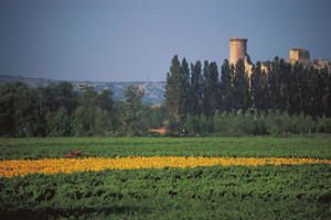 Photo: Field of sunflowers and vines surrounding a ruined castle in the Southern Rhône