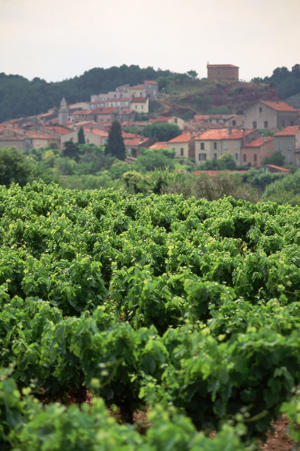 Photo: View of vineyard in the Côtes de Provence