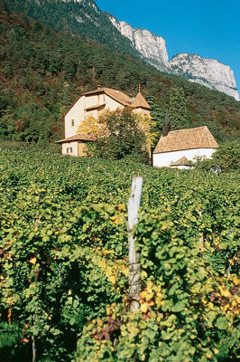Photo: Produttori San Michele Appiano's winery and vineyard, Alto Adige