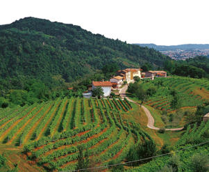 Photo: Hillside vineyards in Prosecco di Valdobbiadene & Conegliano