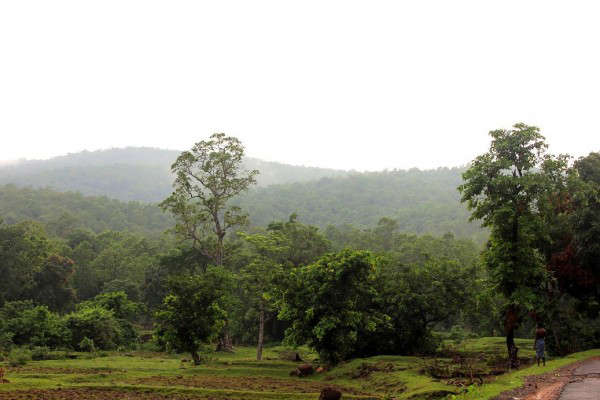 Known as the Kashmir of Odisha, this hill station is situated at an altitude of 3,000 feet above sea level in the state's Kandhmal district. Relatively less frequented by tourists, the place is beautified by the green valleys accompanied by pine and coffee gardens. It is the only place in Odisha that is said to receive snow during winters when temperatures occasionally drop down to zero degree Celsius. Quite a few accommodation options are available and Deers Eco Home is a good option, though it is situated a few kilometers away from the town. Nearest airport – Bhubaneshwar, 291 km Nearest railway station – Berhampur, 125 km: Daringbadi, Orissa