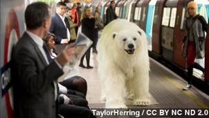 Fake Polar Bear On Streets Of London Is Quite The PR Stunt