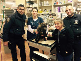 In this photo provided by the New York Police Department's 41st Precinct Twitter account, NYPD officers and veterinary medicine workers are seen with the dog Hennessy.