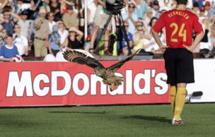 An Eagle owl flies interrupts an Euro 2008 Group A qualifying football match in Helsinki, Finland, on June 6, 2007.