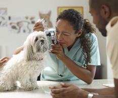 Veterinarian examining a dog.   Fuse/Getty Images