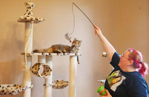 Purr-fect: Cat cafes around the world