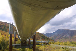 The  800-mile Trans-Alaska pipeline that feeds 950,000 barrels of oil a day to the West Coast snakes it way across the tundra north of Fairbanks, Alaska, in this undated file photo. Depending on whom you ask, the Trans-Alaska Oil Pipeline System is worth $1.5 billion, $3 billion or $13 billion. (AP Photo/Al Grillo)