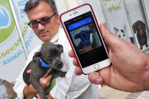 A dog is scanned with the FInding Rover app in Miami, March 17, 2015.