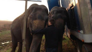 Elephants Help Keep 18-Wheeler From Toppling Over