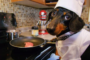 Crusoe the dachshund loves to cook. He particularly enjoys making Italian flavoured recipes, and most recently created a delicious bruschetta.