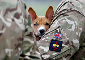 A Basenji puppy looks out as he is held by a soldier watching the Household Cavalry Mounted Regiment parade in London's Hyde Park on Thursday, March 26, 2015. The regiment was undergoing its annual inspection to validate its ability to conduct state ceremonial duties for the year. Kirsty Wigglesworth/AP