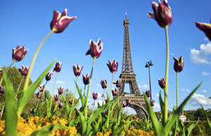 The Eiffel Tower in Paris during the spring.
